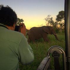 Wildlife Conservation, Tart, Caramel, Vanilla, Alice, Elephant, Sky, Sunset, Instagram Posts