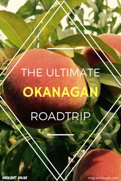 The Ultimate Roadtrip Guide to the Okanagan, in British Columbia Things To Do In Kelowna, Vernon Bc, Voyage Canada, Canadian Travel, Canadian Rockies, British Columbia, Columbia Travel, Travel Ideas, Travel Inspiration