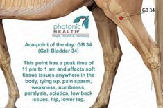 This Acu-point of the day is a big one! Helps from headache to depression. chec… This Acu-point of the day Equine Massage Therapy, Horse Therapy, Acupuncture Points, Acupressure Points, Shiatsu, Horse Exercises, Horse Anatomy, Chest Congestion, Trigger Point Therapy