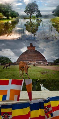 Tour Operator, Original Image, Maldives, Sri Lanka, Places To Travel, Traveling By Yourself, Tours, Album, The Originals