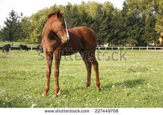 Pretty foal stands in a summer paddock. Baby horse in pasture