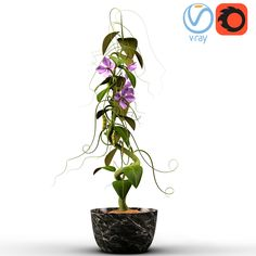 Peas (With Animation) Low Poly 3D Model | Download Royalty Free Plant 3D Models - 3D Squirrel