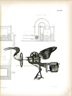 Bird Hybrid 3 by Vanessa Woods