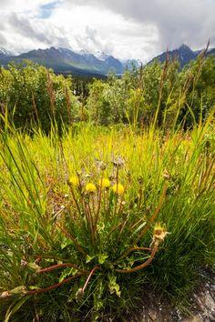 Anchorage Alaska in the Spring