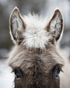 Sophia the Donkey - 8X10 Fine Art Print by janeheller @sunsan #photography #art #gifts