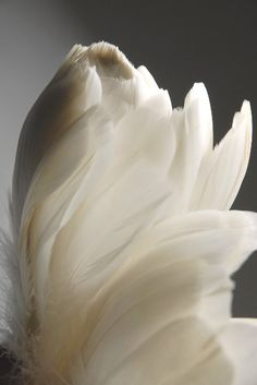 white goose feathers  www.facebook.com/loveswish