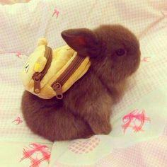 Tiny bunny with tiny backpack.