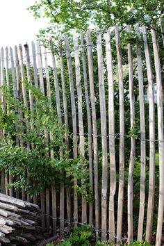 LAG EN LEVEGG: Du trenger ikke å være snekker for å bygge et tøft gjerde eller en rustikk levegg! Har du tykk ståltråd og får tak i spikket drivved eller slitte, tynne stokker, har du det du trenger. Bind stokkene bortover på tre punkt med ståltråden, og bank dem ned i jorden så langt du ønsker gjerdet eller leveggen. Foto: Krista Elvheim