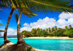 Tropical Beaches and Palm Trees Ocean View Wallpaper, Ocean Wallpaper, Photo Wallpaper, Pattern Wallpaper, The Beach, Summer Beach, Palm Beach, Bffs, Selfies