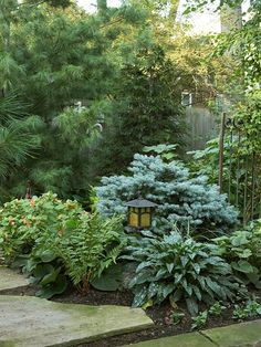 Low-Maintenance Landscape, rear of yard near fire pit.  a white pine dominates against a wooden fence.A globe blue spruce bridges the divide between path and trees behind it. Pulmonaria and ferns offer hardy growth patterns with little TLC.