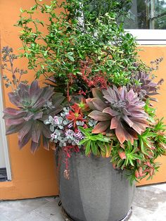 Container packed with succulents and a Flying Dragon Citrus   Flickr – Compartilhamento de fotos!