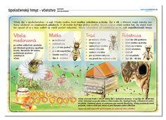 Spoločenský hmyz - včelstvo | datakabinet.sk