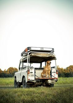 Photo Credit: Terry Manier. For the December/January cover shoot, golden retriever Rimi sits ready on a 1972 Land Rover Series III near Ridgeland, South Carolina.