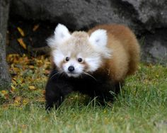 Detroit Zoo Offers Tofu to Lucky Visitors  ...