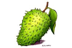 Graviola, anticancer, antiulver, antidiabetic....etc.  amazing fruit and plant