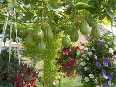 Flores e chuchus.  http://www.portalanaroca.com.br/e-ai-vc-gostou-8/