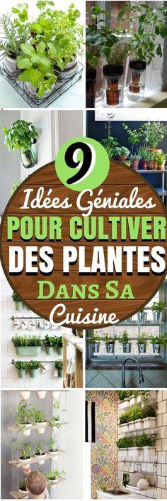 Voici 9 IDÉES DE PLANTES D'INTÉRIEURE POUR LA DECO DE LA CUISINE. Qu'est-ce qui pourrait être plus écologique que de cultiver des plantes directement dans votre cuisine ? Cultiver des plantes à l'intérieur de sa cuisine n'est pas sans défis, mais si votre cuisine a suffisamment de lumière, vous allez pouvoir transformer votre cuisine ! Voici quelques idées pour vous aider à démarrer…#deco #idéesdéco #diy #cuisine #décoration #chasseursdastuces