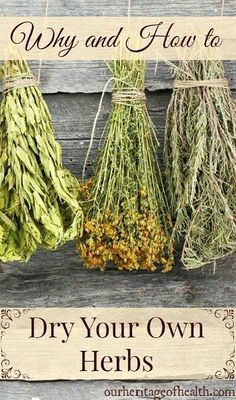 Why you should dry your own herbs and tips for how to do it properly | ourheritageofhealth.com