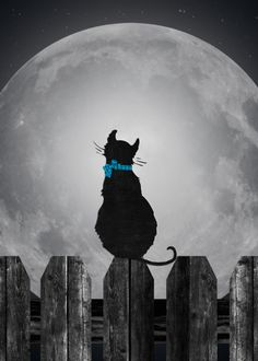 Miss You on your Birthday-silhouette of cat on a fence with full moon card. Personalize any greeting card for no additional cost! Cards are shipped the Next Business Day. Cat Fence, Missing Someone, Miss You Cards, Cat Sitting, Moon Art, Hallows Eve, Full Moon, I Card, Birthday Cards