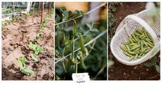 KonyhaKert - Vetésterv részletesen, növénytársításokkal - Sülve-főve együtt Outdoor Structures, Plants, Plant, Planets