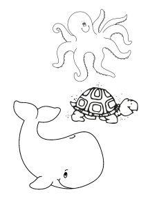 Bläckfisk Sköldpadda Val