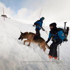 Equipe cynophile de la CRS des Alpes à la recherche d'une victime d'avalanche [Ref:2310-02-1584] #secoursenmontagne #K9 #policenationale #CRS #K9handler
