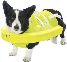 Life jacket for pets