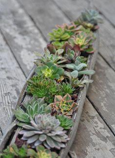 A drift wood planter by Lila B Designs Succulent Pod, Gardenista