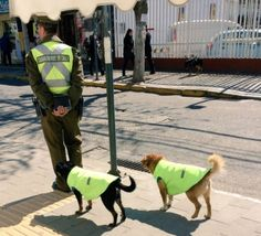 dogs-from-quilpue-1