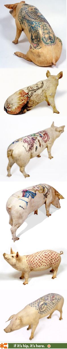 Inked Oinkers: Tattooed Pigs. My most controversial post to date.