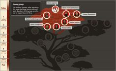 LESSON 3, The Coming of Human Beings- Human Family Tree | The Smithsonian Institution's Human Origins Program