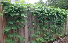 Choose the Right Trellis for your Climbing Vegetables Did you know there are three types of climbing Vine Trellis, Garden Yard Ideas, Metal Fence, Choose The Right, Jena, Climbing, Vines, Grid, Outdoor Structures