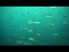 伊豆で魚の群れと泳ぐ!東京のダイビングスクールは埼玉県三郷も近く