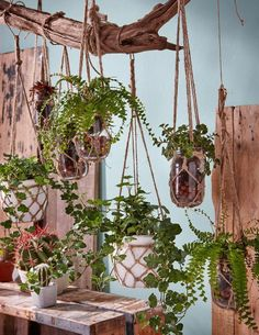 Dat het buiten koud en kaal is betekent niet dat je geen groen in huis kunt hale… That it is cold and bare outside does not mean that you cannot get greenery into your home! Which plants would you hang in it? Room With Plants, House Plants Decor, Deco Spa, Deco Nature, Decoration Plante, Bedroom Plants, Hanging Planters, Houseplants, Driftwood