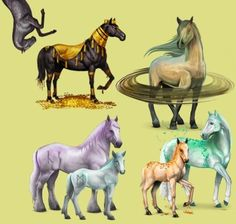 Divine Horses on the internet game Howrse, are very rare!!!
