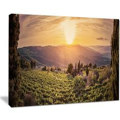 """DesignArt Vine Farm at Sunset Tuscany Panorama Photographic Print on Wrapped Canvas Size: 30"""" H x 40"""" W x 1"""" D"""