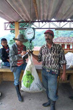Un árbol de café vive unos 30 años y que cada 8 hay que cortar el palo cerca de 30 centímetros para que siga creciendo; que en Colombia, a diferencia de otros países, todo el café se recolecta a mano y que en época de cosecha pueden llegar a recogerse al día 120 kilos por persona.