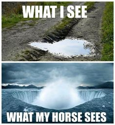 A collection of funny and cute horse pictures, photos, images, memes. Check out to get funny pictures, funny horse quotes. Funny Horse Memes, Funny Horse Pictures, Funny Horses, Cute Horses, Funny Animal Memes, Pretty Horses, Horse Love, Beautiful Horses, Funny Animals