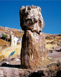 Petrified Forest Lesbos