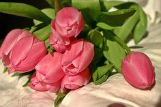 Lale, Lale Buketi, Bahar, Çiçek, Pembe, Buket