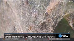 This unusual spider activity demonstrates the power of collective impact.