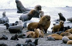 Sea Lions on Galapagos Islands Patagonia, Places To Travel, Places To Go, Water Animals, Peru Travel, Animal Crackers, Galapagos Islands, Fauna, Marine Life