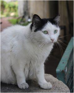 a beautiful cat in the center of Tel Aviv