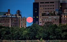 Harvest moon rising between buildings in NYC on September 30, 2012. Photo via Inga's Angle.