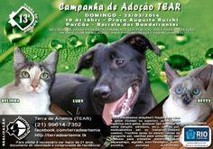 Bonde da Bardot: RJ: ADOÇÃO DE ANIMAIS NO RECREIO DOS BAN...
