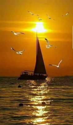 sail boat and sunset birds Reflection Pictures, Dawn And Dusk, Country Scenes, Beach Pictures, Amazing Pics, Nature Scenes, Amazing Nature, Sailing, Nature Photography