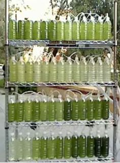 An Algae Bioreactor from Recycled Water Bottles   How to build a photo-bioreactor that uses algae to convert carbon dioxide and sunlight into energy.