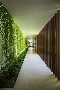The three volumes which form The Drawers House are connected by a hallway decorated with a wall of creeper plants which extends length of the site
