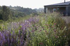 Dan Pearson perennials bed Somerset garden by Huw Morgan