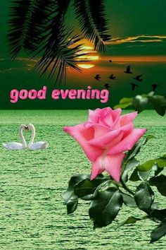 Romantic Good Night Messages, Good Evening Messages, Good Evening Greetings, Good Morning Flowers Gif, Good Night Flowers, Good Morning Happy Monday, Good Morning Good Night, Evening Pictures, Latest Good Morning Images